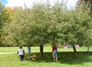 The local Confirmation class picking apples